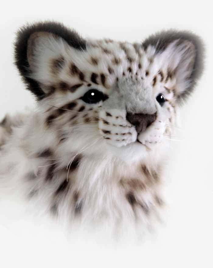 Hansa Snow Leopard
